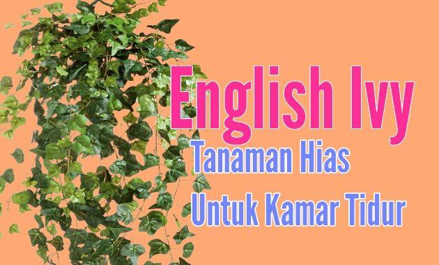 Tanaman hias english ivy cocok untuk tanaman hias kamar tidur