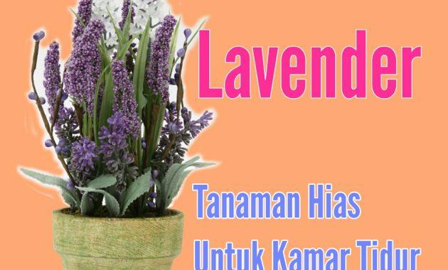 lavender tanaman hias untuk kamar tidur