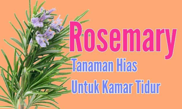 Rosemary cocok untuk tanaman hias dikamar tidur